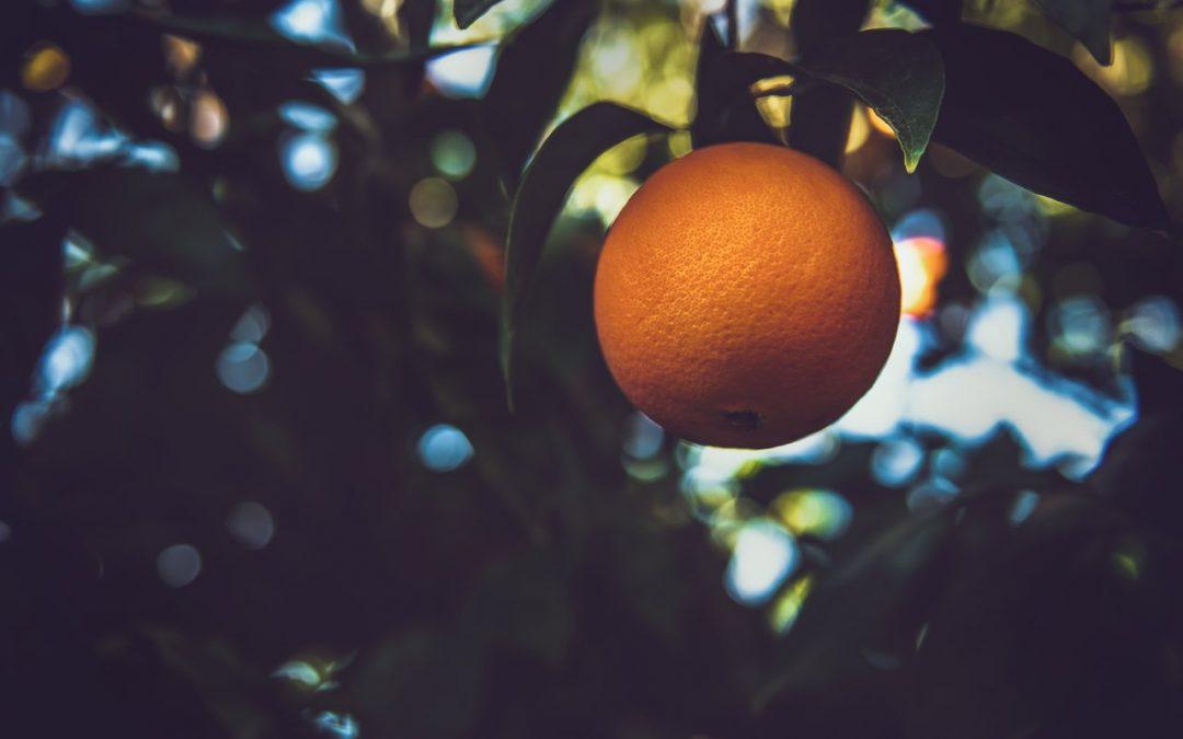 Qual a principal função da laranjeira?